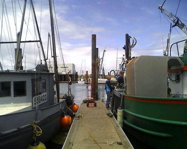 Gallery Image lord-bennetts-picking-up-fresh-prawns.jpg