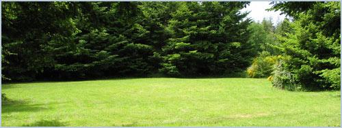 Gallery Image grass.jpg