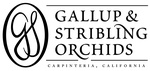 Gallup & Stribling Orchids