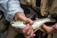Gallery Image Fishing-in-Vermont-for-salmon.jpg