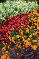 Beverly Bradley Landscape Designs & Services, Inc.