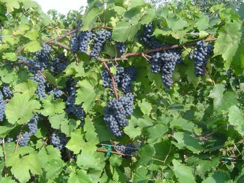 A good crop!