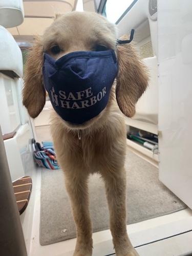 Safe Harbor Face Mask