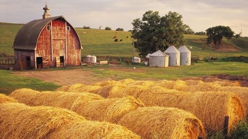 Gallery Image Kenny-agricultural%20insurance.jpg