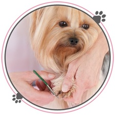 At Your Bark and Call Grooming, Inc.