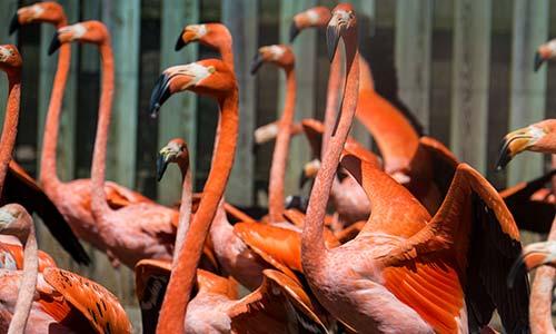 Gallery Image flamingo_gallery3.jpg