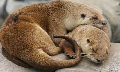 Gallery Image otter_gallery3.jpg