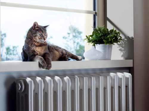 We provide tender loving care for plants and cats while you're away.
