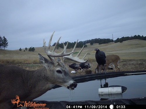Gallery Image Buck%20West%20at%20tank%20with%20turkey_270421-124040.jpg