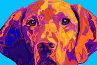 Brown Dog Promos