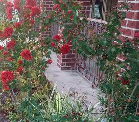 Crepe Myrtles Near the Porch