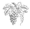 Ancient Lake Wine Company LLC