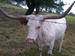 Rubin Livestock Service Inc.