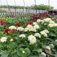 Plainfield Perennials LLC
