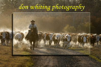Don Whiting Photography