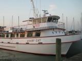 Wharf Cat