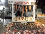 Dolphin Dock, Inc.
