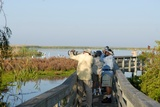 Leonabelle Turnbull Birding Center