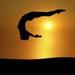 Fearless Gymnastics
