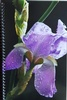 Iris Garden Club of Washington Georgia