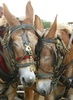 Mule Day - Southern Heritage Festival
