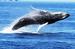 Dolphin Fleet Whalewatch