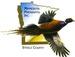 Minnesota Pheasants, Inc.