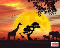 Gallery Image safari.jpg