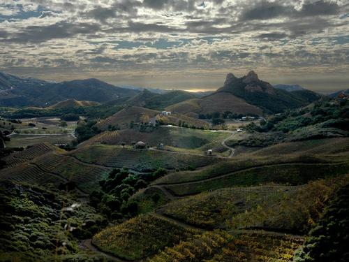 Gallery Image malibu-family-wines-vineyards.jpg