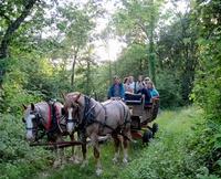 Horse-Drawn Wagon/Sleigh Rides