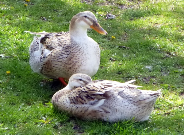 Gallery Image sylvan-park-ducks.jpg