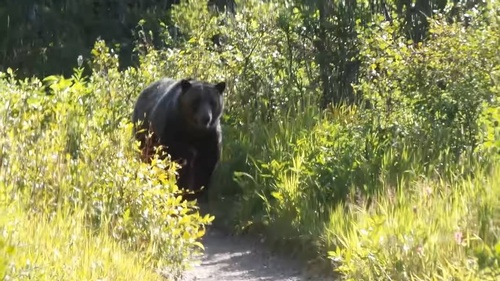Gallery Image Grizzly%2012.jpg