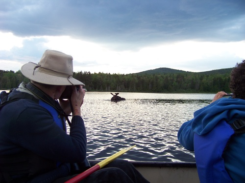 Moose Canoe Tours