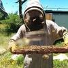 Behlen Bees