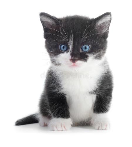 Gallery Image cat%202.jpg