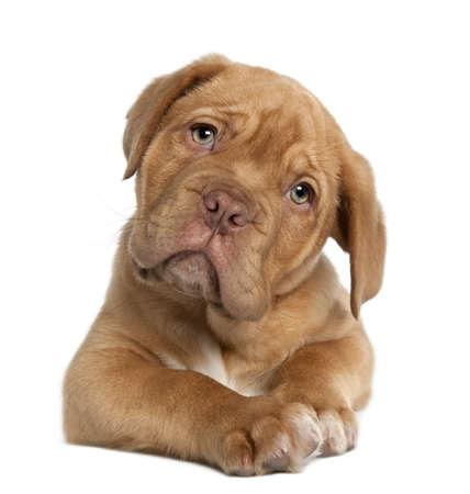 Gallery Image puppy1.jpg