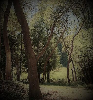 Gallery Image IMG_1358.jpg
