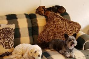 Gallery Image bed%20bark%20and%20beyond%203.jpg