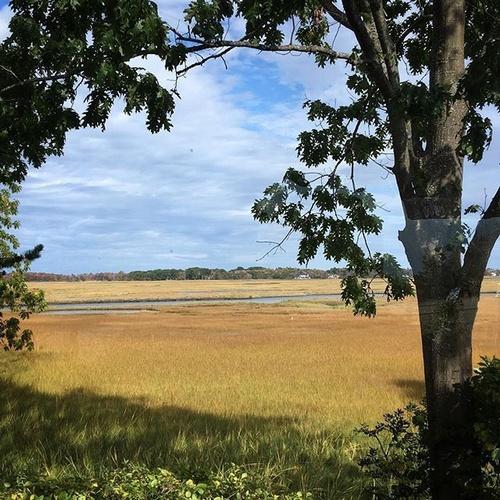 Gallery Image marsh.jpg