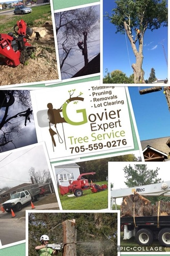 Gallery Image govier%20trees%20photo.jpg