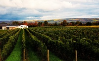 Hermann J. Wiemer Vineyard