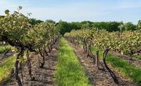 Rock Stream Vineyards
