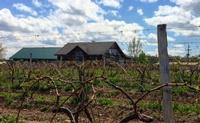 Shaw Vineyards