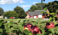 Apple Barrel Orchards