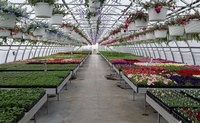 Horning's Greenhouse, Garden Center & Nursery