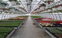 Horning's Greenhouse, Garden Center & Nursery