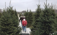 Scottish Glen Christmas Tree Farm