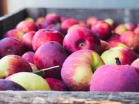 Wager's Cider Mill