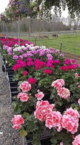 Gallery Image Flowers2_290121-085812.JPG
