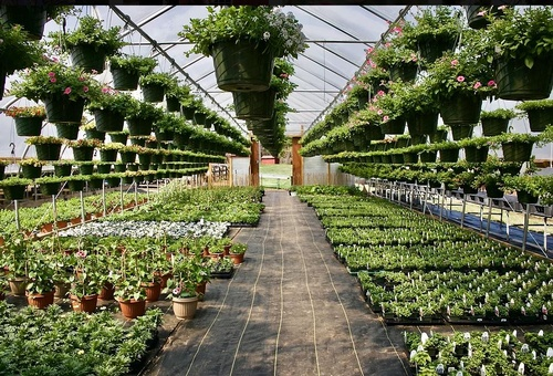 Gallery Image Plants%20in%20Greenhouse_290121-085736.JPG